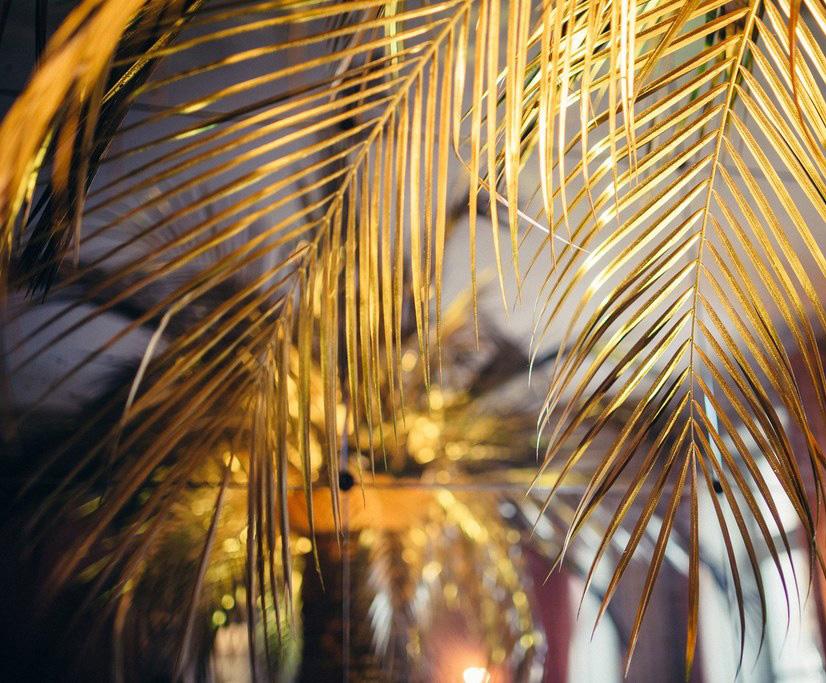 palmier4